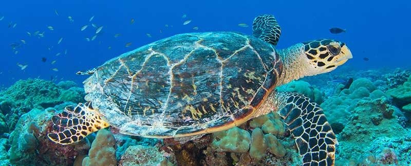 The Race is On to Save the Sea Turtles